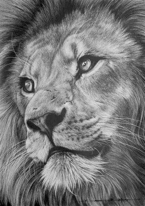 south african wildlife artist dawie mocke wild life