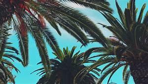 Palmenarten Für Draußen : palmen zimmerpflanze f r den exotisch tropischen flair zuhause ~ Michelbontemps.com Haus und Dekorationen