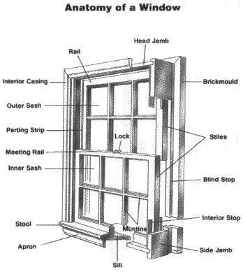 anatomy   window google image result  httpwww