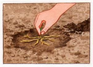 Quand Planter Le Muguet : muguet un porte bonheur au jardin ~ Melissatoandfro.com Idées de Décoration