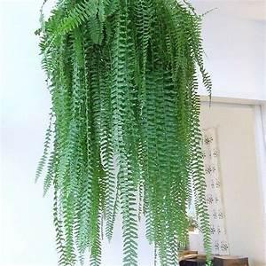Indoor Hanging Plants Low Light Hanging Fern Best Indoor Plants Hanging Plants Indoor