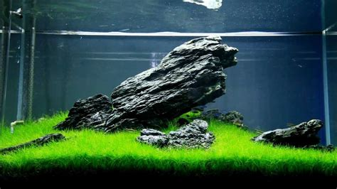 aquascaping iwagumi youtube