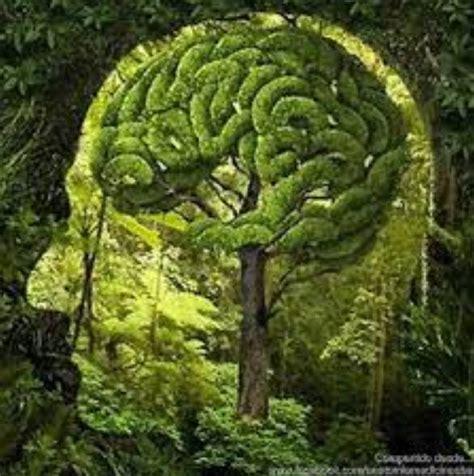 Seeing Green Your Brain Nature Health Wellness