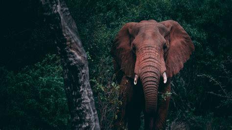 Download Wallpaper 2560x1440 Elephant Forest Wildlife