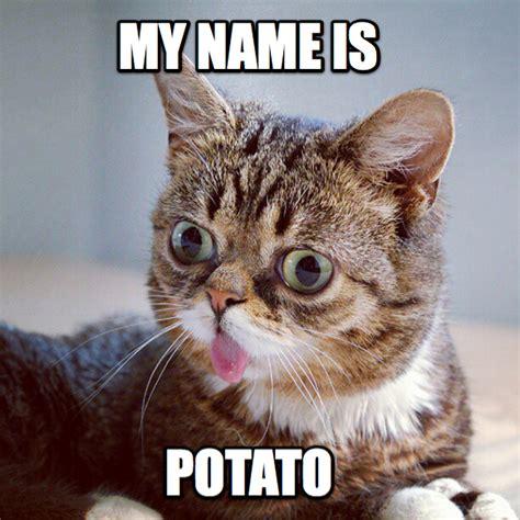 la vera storia  lil bub il gatto piu tossicodipendente