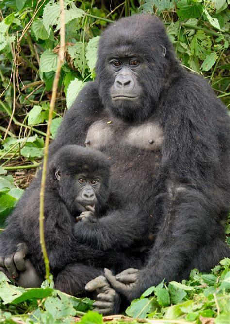 nationalpark im kongo wie ranger ihr leben fuer die
