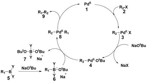 Suzuki Coupling Reaction by File Mechanism Of Suzuki Coupling Png