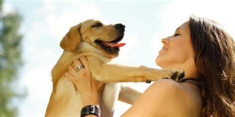 ucapkan selamat hari raya  anjing wanita malaysia ditahan merdekacom