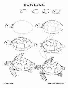 Sea Turtles Drawings Step By Step | www.pixshark.com ...