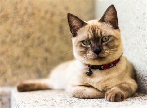 katzenrassen uebersicht mit bildern hier finden sie ihre