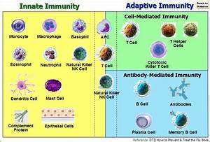 Autoimmune Protocol (AIP) Leaky Gut Nutritional Program
