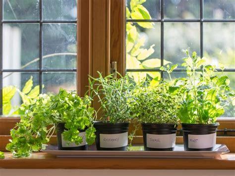 Window Herb Garden by How To Plant A Windowsill Herb Garden How Tos Diy