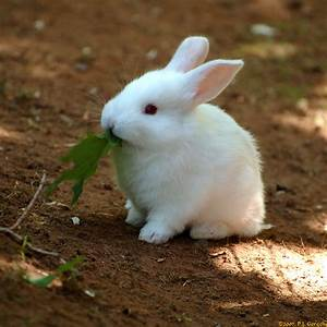 """Photo """"cute tiny baby bunny rabbit noms green leaf"""" in the ..."""