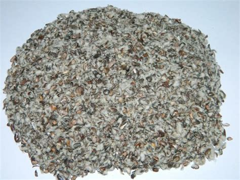 cotton seed hull cotton seed hull exporter importer