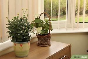 Pflanzen Luftreinigung Schlafzimmer : besser atmen wikihow ~ Eleganceandgraceweddings.com Haus und Dekorationen