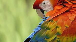 Parrot Wallpapers - Wallpaper Cave