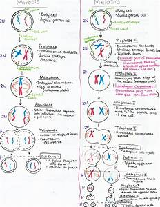 Pin By Francine C  On Hesi A2 Biology