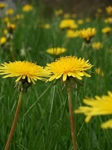 Que Mettre Au Sol Pour éviter Les Mauvaises Herbes : pelouse quels sont les diff rents types ~ Dailycaller-alerts.com Idées de Décoration