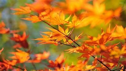 Leaves Autumn Branch Leaf Desktop Wallpapers Fall