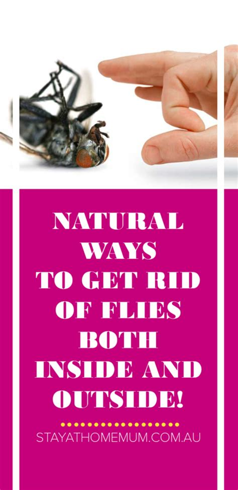 how to get rid of flies outside on patio 9 ways to get rid of flies both inside and outside