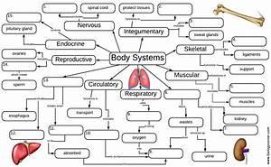 Organ Systems Graphic Organizer