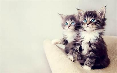 Kittens Wallpapers Kitten 1600 Cat Adorable Cats