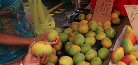 chambre agriculture 59 ils trafiquent les mangues pour les vendre quot mûres quot