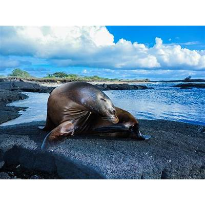 The Galapagos Islands - An Insider's Guide