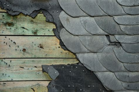images rock structure wood texture leaf floor