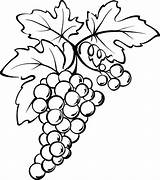 Grapes Coloring Drawing Grape Vine Wine Stencils Outline Vines Drawings Leaf Spain Line Colorear Bottle Stencil Patterns Vino Vigne Fruit sketch template