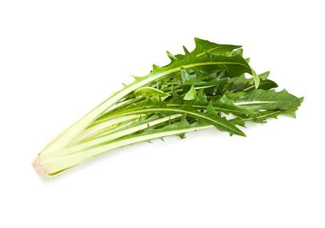 cuisiner l endive légumes suisses catalogna