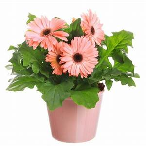 Pflanzen Die Kaum Licht Brauchen : zimmerpflanzen die wenig licht brauchen ~ Markanthonyermac.com Haus und Dekorationen