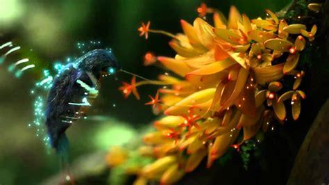 animatsiya kolibri video rolik na video oboi zhivye oboi