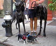 Laisser Un Chien Seul Quand On Travaille : chien wikip dia ~ Medecine-chirurgie-esthetiques.com Avis de Voitures