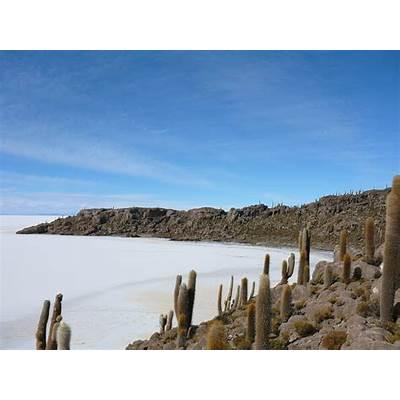 File:Isla del Pescado in Uyuni.JPG - Wikimedia Commons