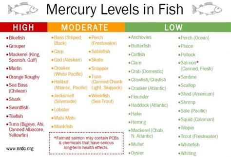 fish   fish  facts  mercury levels  fish