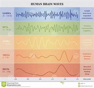 Human Brain And Universe Royalty