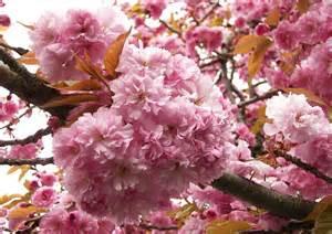 bibelsprüche hochzeit bibelsprüche zur taufe lebt als kinder des lichtes die frucht des lichtes ist lauter güte und