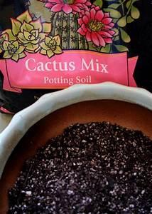 plantes grasses exterieur conseils et idees pour With idee decoration jardin exterieur 11 cactus entretien arrossage et rempotage