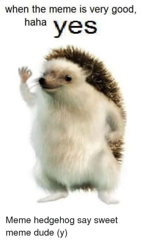 Hedgehog Meme - funny hedgehog memes of 2017 on sizzle hedgehoging
