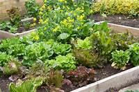 vegetable garden plans Small Vegetable Garden Plans Layouts | The Old Farmer's Almanac