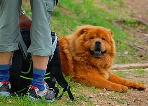 Hundefreundliche Hotels Urlaub Mit Hund In Sdtirol