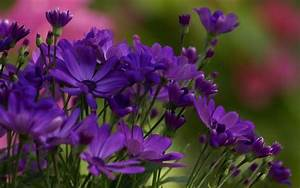 Violet Flower Pictures - Beautiful Flowers