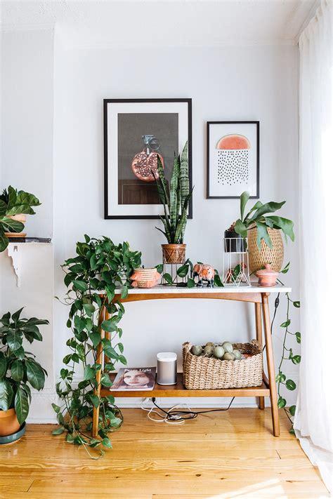 bring climbing vines indoor    home