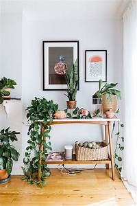 bring, climbing, vines, indoor, and, make, your, home, look, like, a, green, jungle