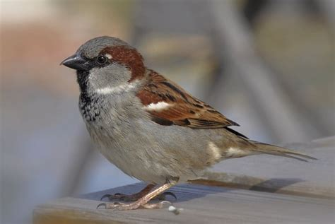 bird control services in new england bain pest control