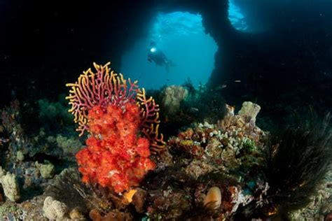 Diving the Famed Misool, Raja Ampat! - WWF Coral Triangle Blog