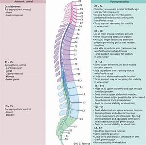 Spinal Cord Injury  Spinal Cord And Cords On Pinterest