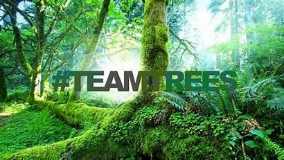 Trees Team Veritas Environment Help Challenge