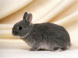 Cute Rabbits Wallpapers